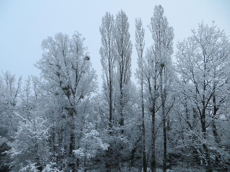 Trees, Snow, Winter, Cold, Nature, Winter Landscape