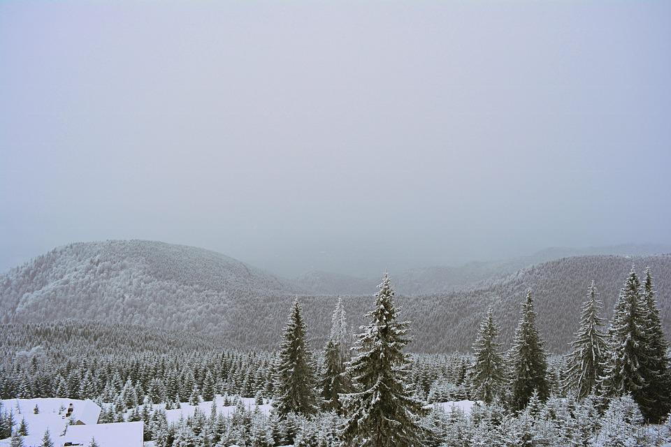 Mountain, Winter, Rânca, Nature, Landscape, Forest