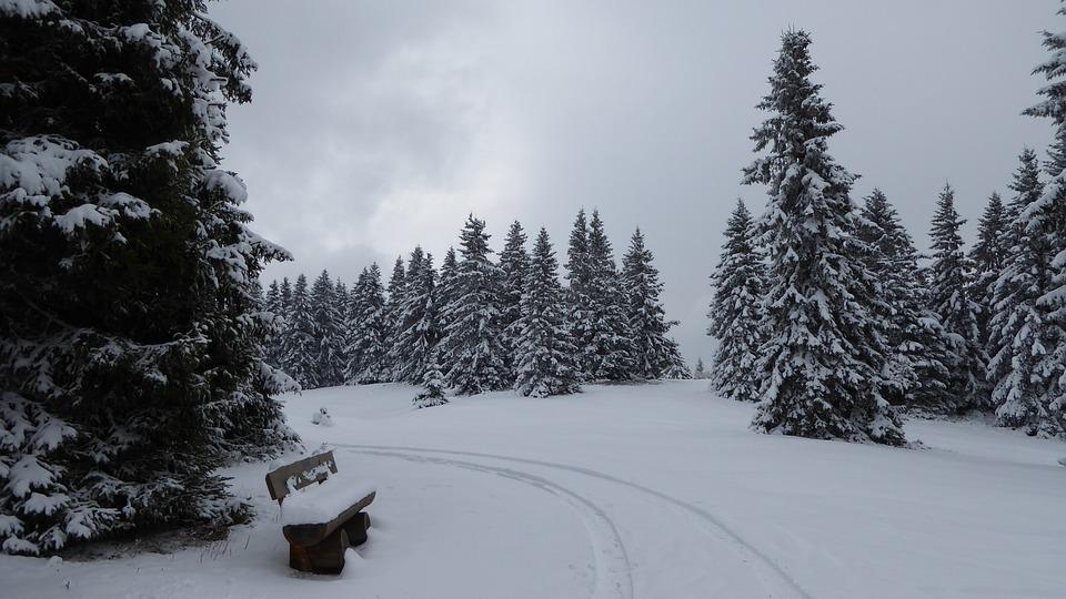 Black Forest, Snow, Winter, Cold, Landscape, Nature