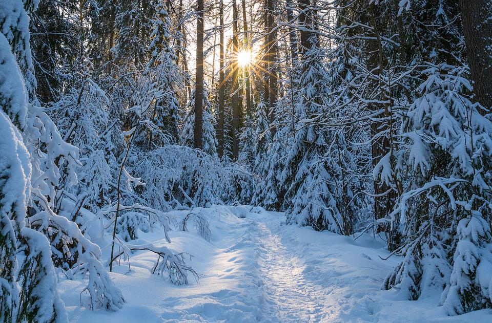 Winter, Snow, Trees, Forest, Landscape, Sun