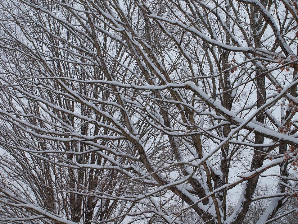 Tree, Snow, Winter, Cold, Season, Landscape, December