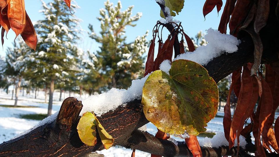 Leaves, Snow, Winter