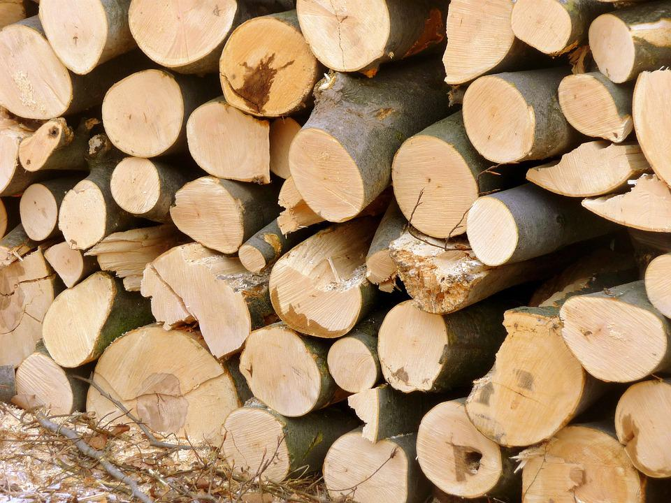 Cold, Wood, Wood-cutting, Forest, Winter, Logging