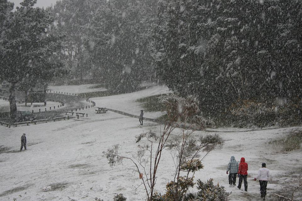 Snow, Lower Hutt, Winter, 2011, Percy Reserve, Grey