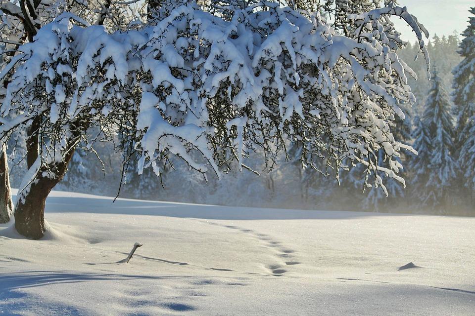Winter, Wintry, Snow, Winter Magic, Cold, Sun, Tree
