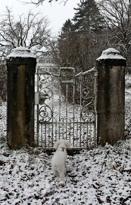Winter, Snow, Dog, Animal, Input, Door, Metal, Goal