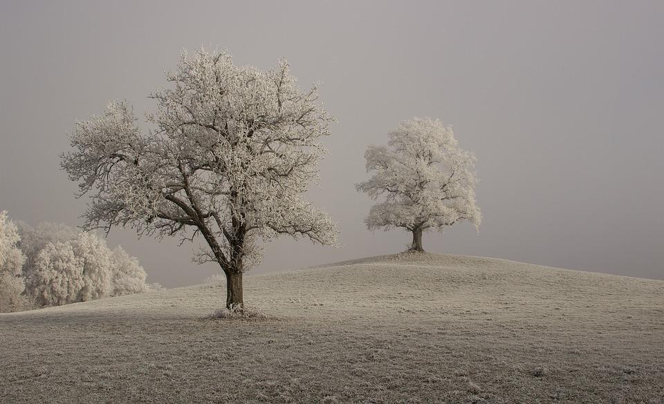 Hoarfrost, Winter, Branches, Mood, Trueb, Foggy, Fog