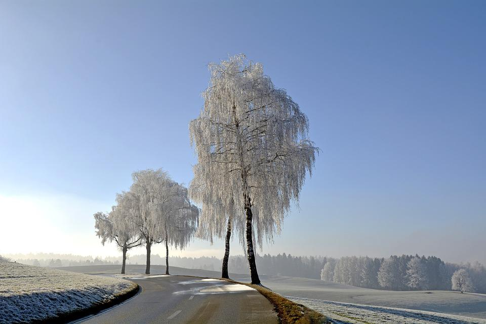Wintry, Winter, Trees, Morgentau, Ripe, Nature, Mood