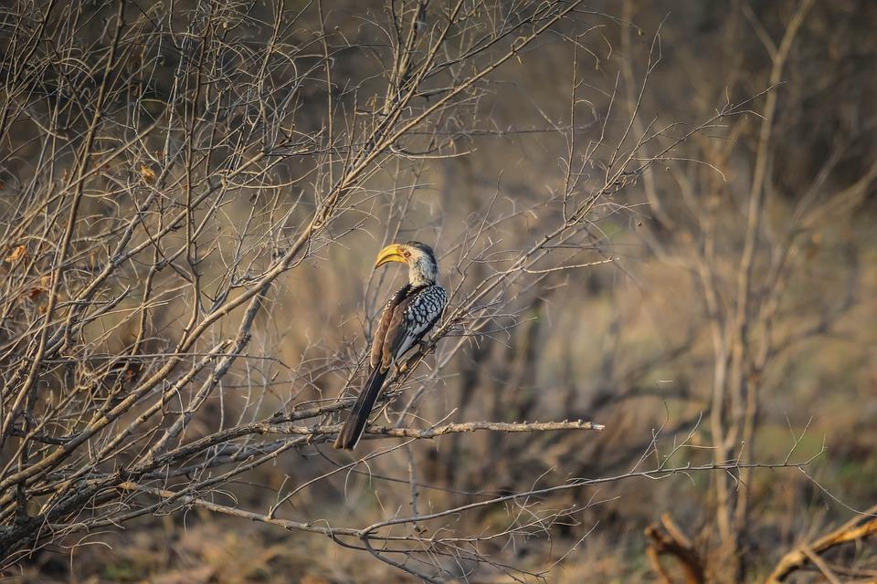 Bird, Nature, Wildlife, Animal, Morning, Winter
