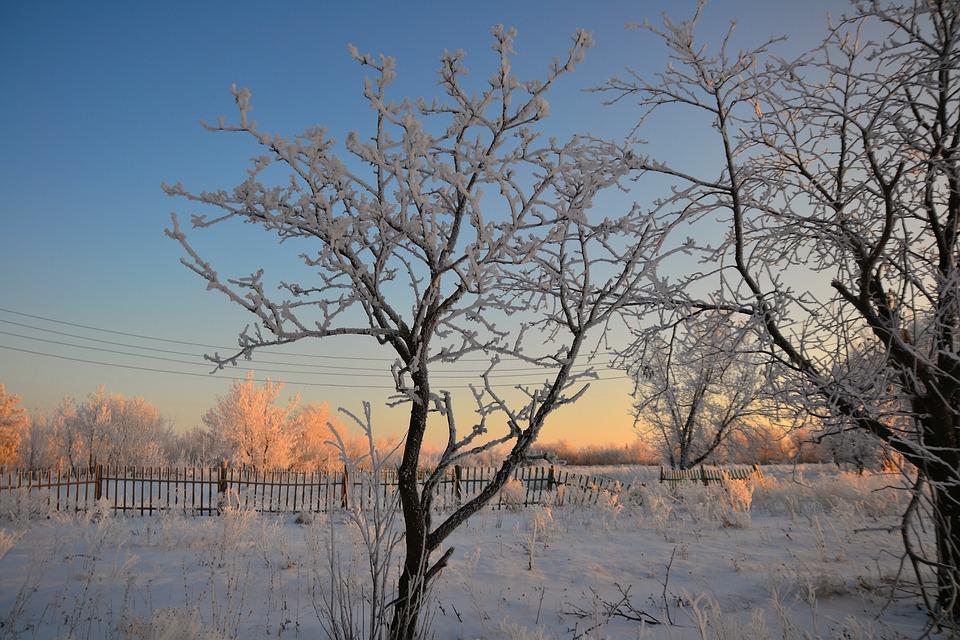 Winter, Morning, Rime, Tree, Fence