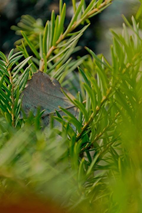 Leaf, Green, Winter, Cold, Fresh, Wet, Garden, Nature