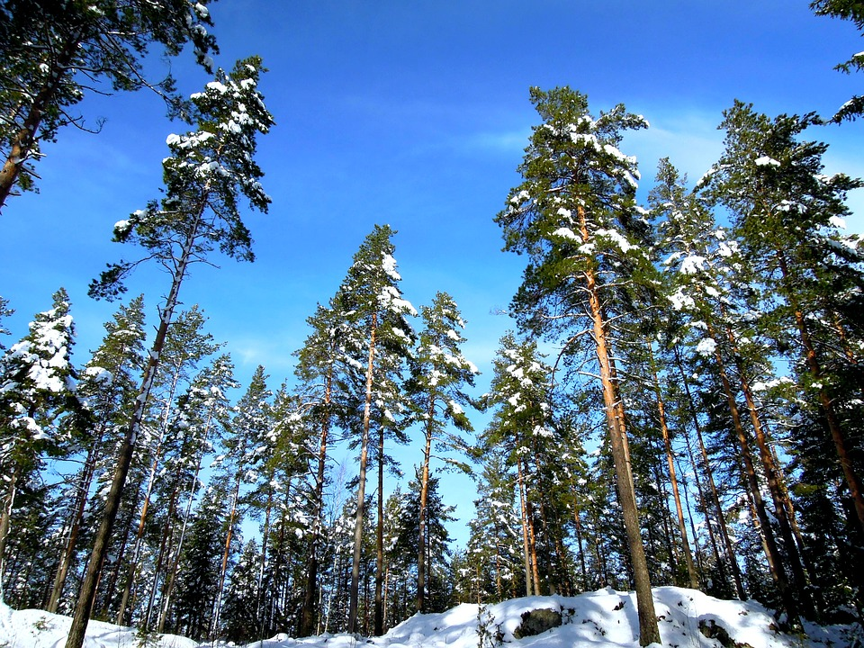 Landscape, Finnish, Sky, Forest, Nature, Frost, Winter