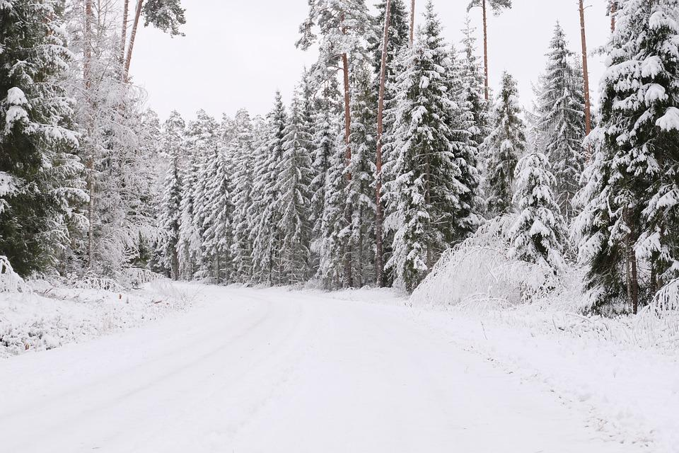 Winter, Trees, Snow, Nature, Cold, Forest, Wintry
