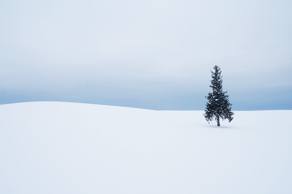 Winter, Snow, Some People Don't, Nature