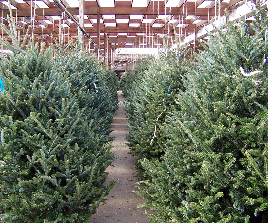 Christmas, Trees, Nursery, Winter, Xmas, Holiday