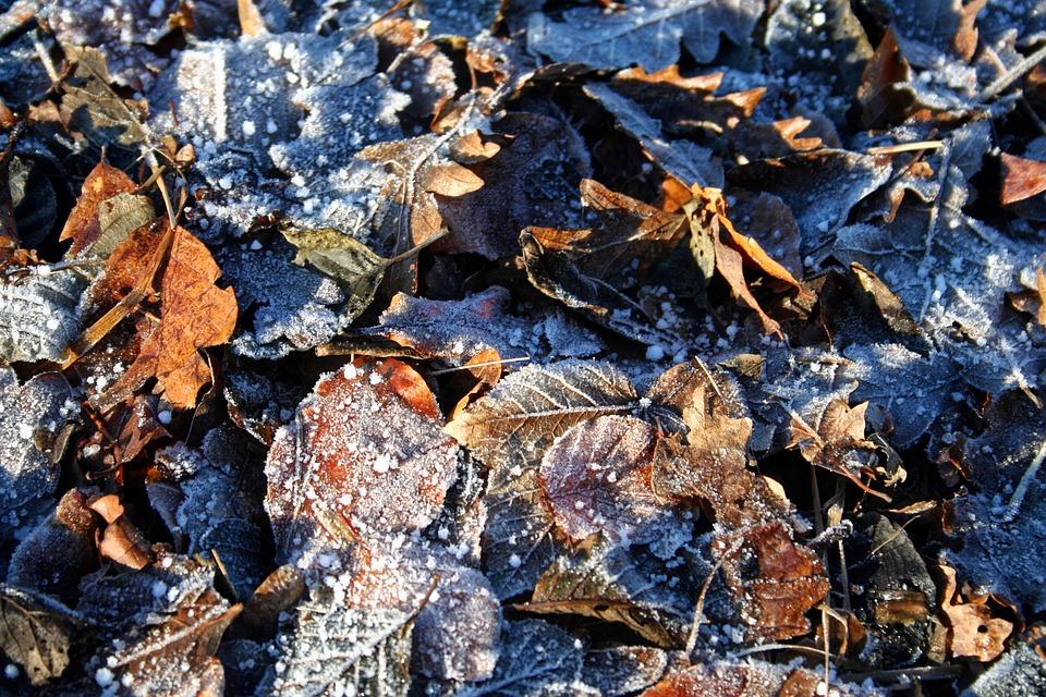 Frost, Leaves, Winter, Park, Morning, Nature, Season