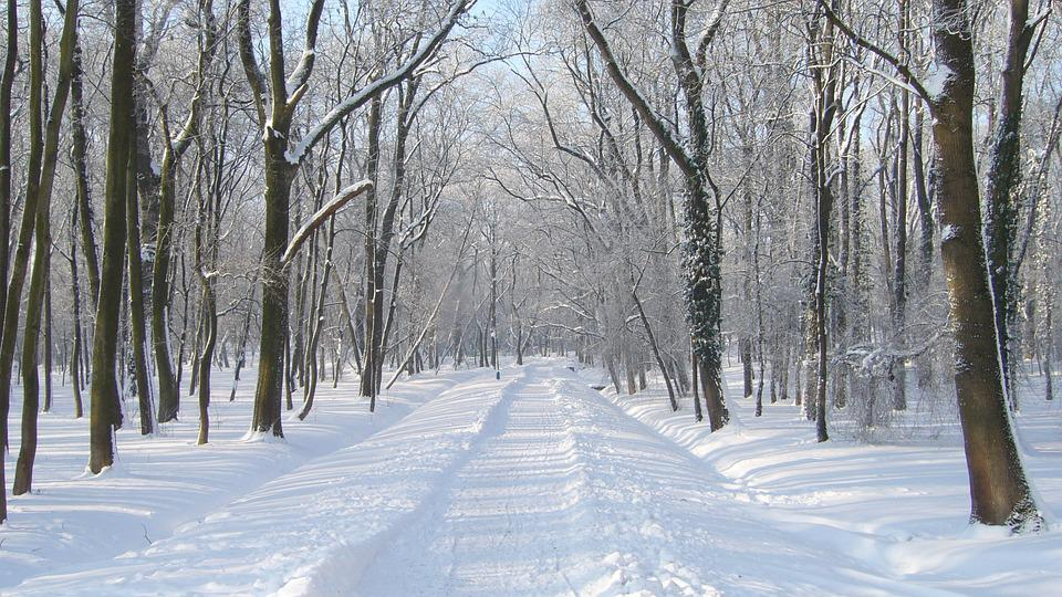Winter, Snow, Park