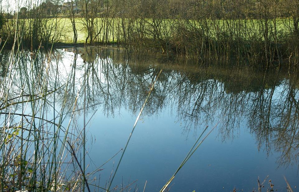 Pond, Winter, Lake, Reflections