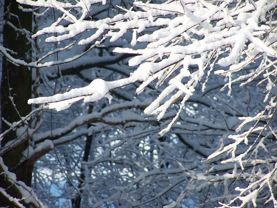 Snow, Trees, Nature, Winter, Season, Branch