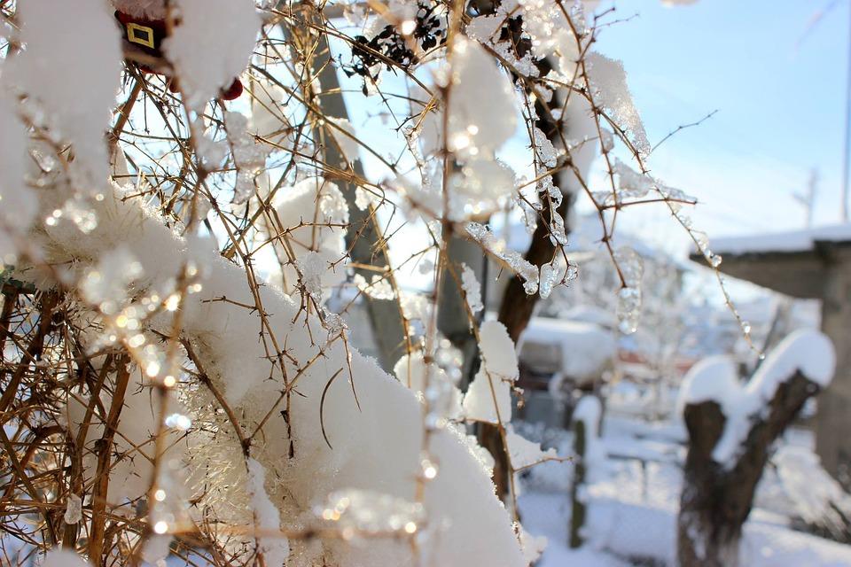 Snow, Tree, Winter, Nature, Season, Ice