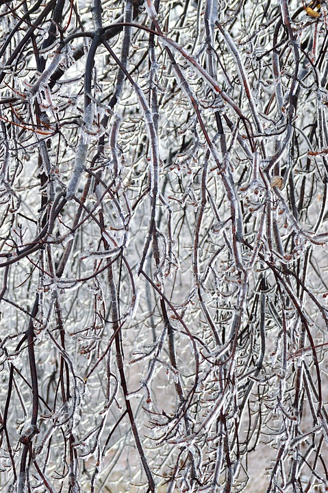 Ice Branches, Winter, Season, Nature, Trees, Storm