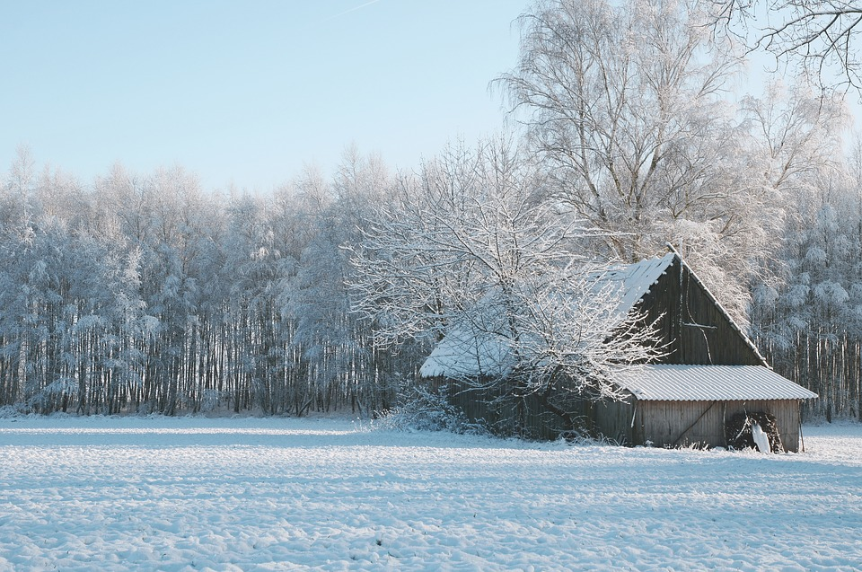 Shed, Winter, Snow, Nature, Forest, Tree, Cold, Field