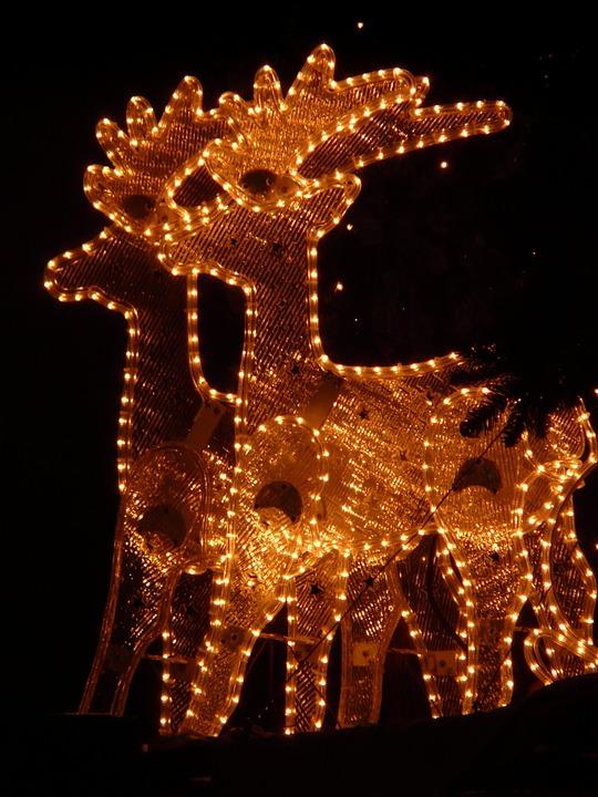 Lichterkette, Christmas, Reindeer, Winter, Shining