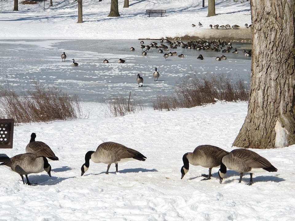 Winter, Animals, Birds, Snow, Nature, Wildlife