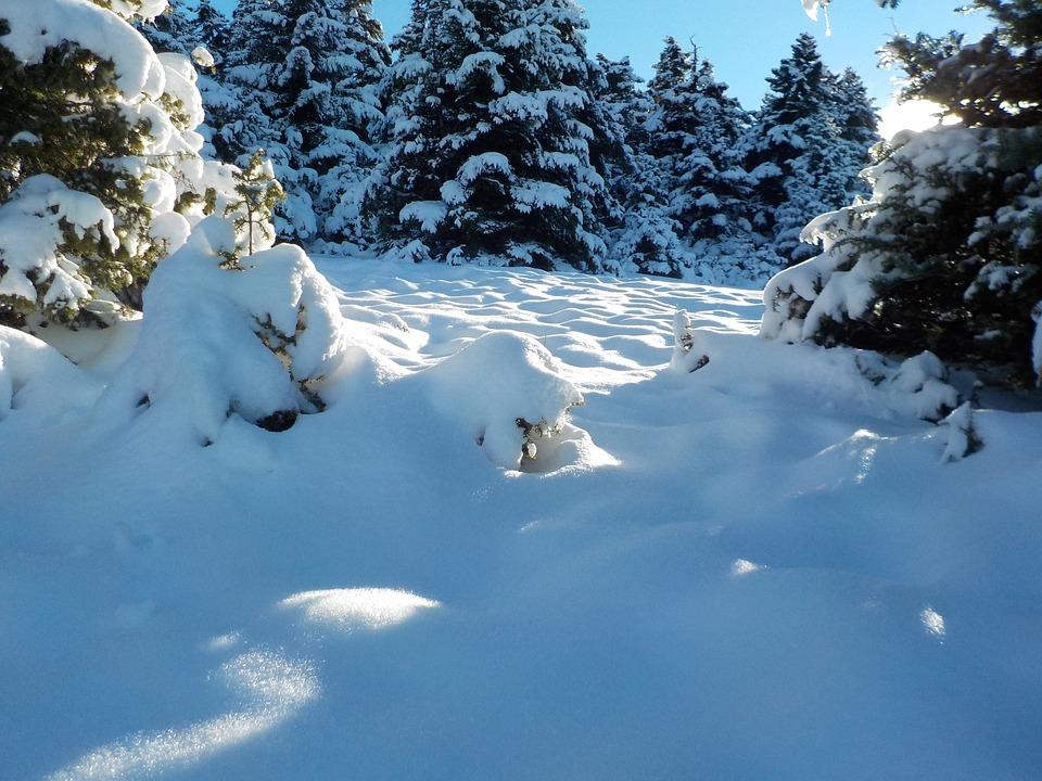 Snow, Cold, Winter