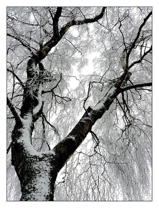 Winter, Frost, Snow, Ice, Cold, Icy, Winter Magic