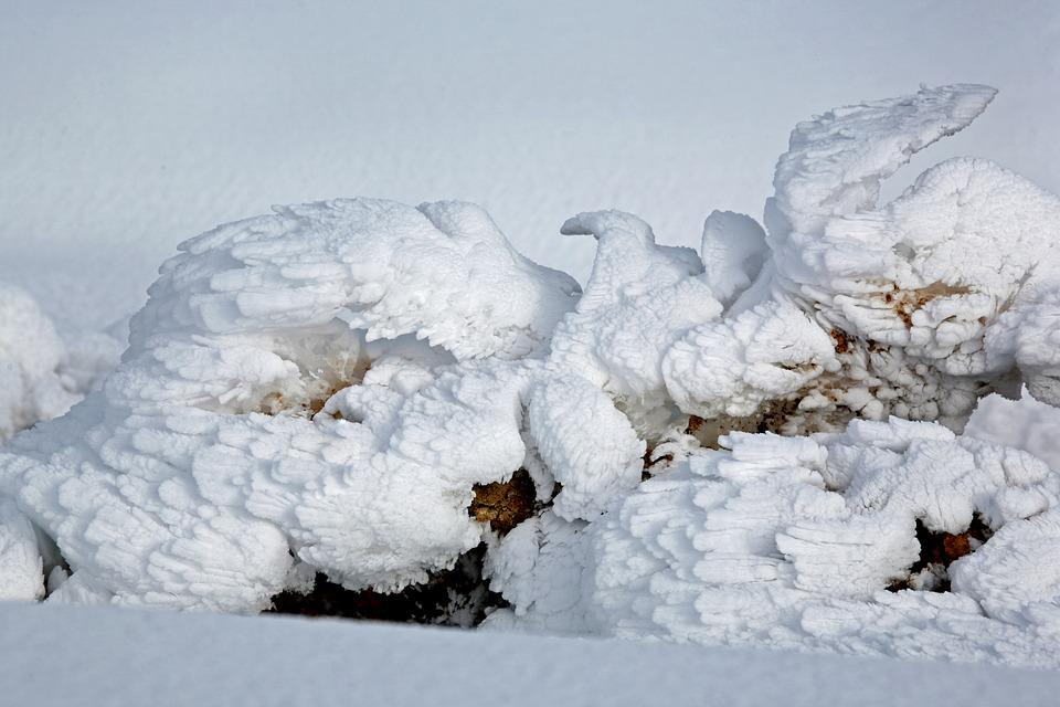 Snow Figures, Dove, Wings, Winter, Snow, Cold, Leann