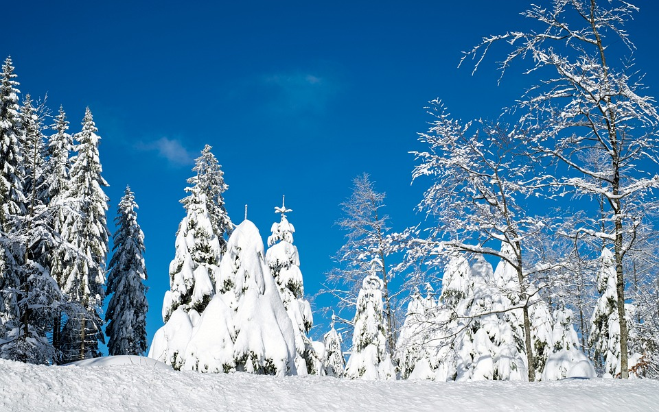 Wintry, Snow, Firs, Trees, Snowy, Time Of Year, Winter