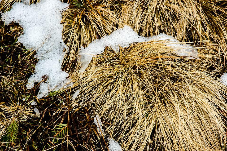 Snow, F, Grass, Frost, Nature, Winter, Snowy, White