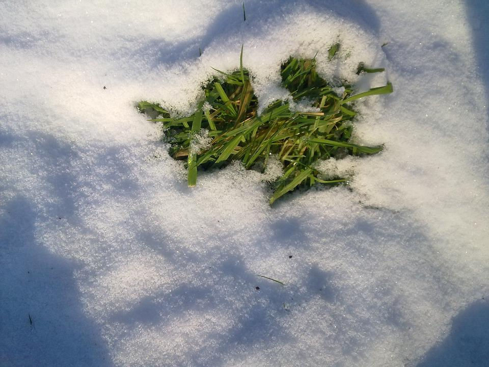Snow, Grass, Winter, Frost