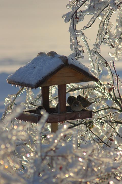 Winter, Ice, Snow, Feeder