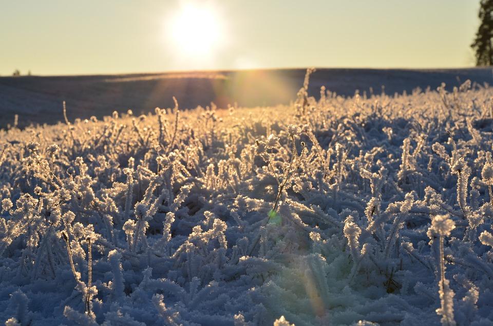 Winter, Snow, Frozen, Sunrise, Field, Countryside, Icy