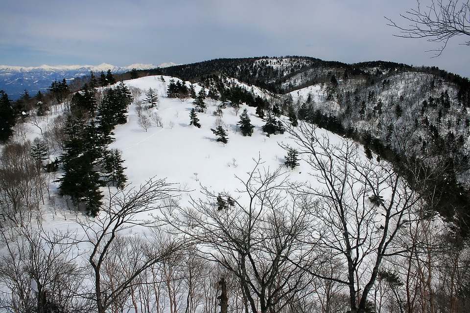 Japan, Mountains, Snow, Winter, Forest, Trees