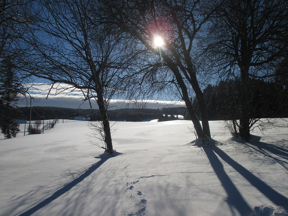 Winter, Shadow, Sunshine, Snow