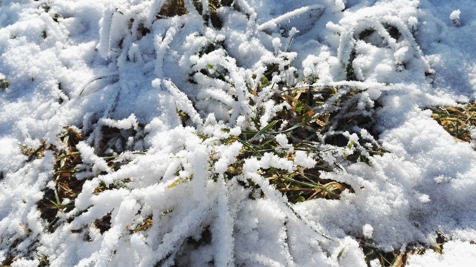 Snow, The First Snow, Winter, Grassland, Recovery