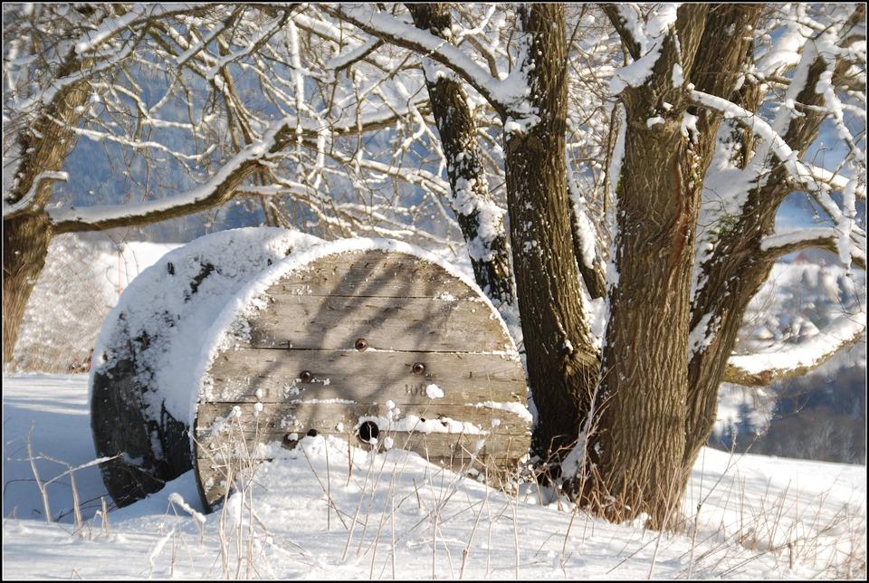 Snow, Winter, Tree