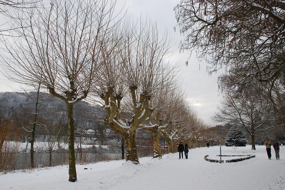 Winter, Trees, Saarbrücken, Snowy, Wintry, Saar River