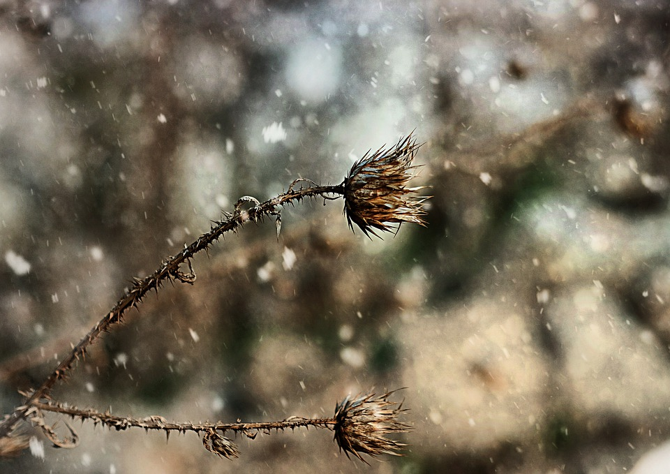 Natur, Thorns, Nature, Spikes, Winter, Spike