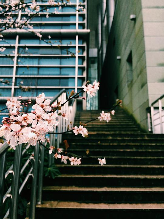 Winter, Plum Blossom, Campus, Stairs