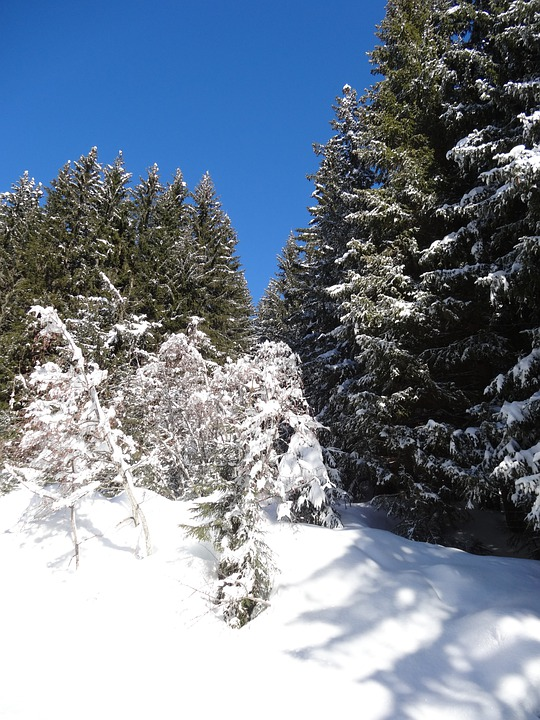 Forest, Sun, Trees, Edge, Winter, Snow