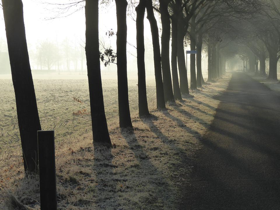 Row Of Trees, Repetition, Sunrise, Cold, Winter