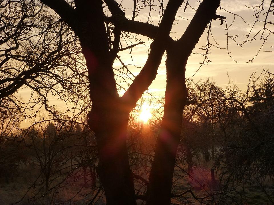Sunrise, Winter Idyll, Morgenrot, Skies, Winter