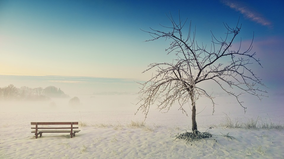 Winter, Nature, Landscape, Tree, Snow, Bank, Wintry
