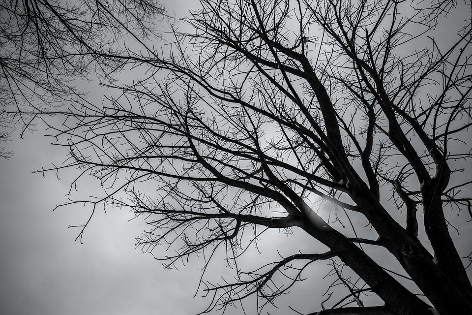 Tree, Winter, Japan, Black And White
