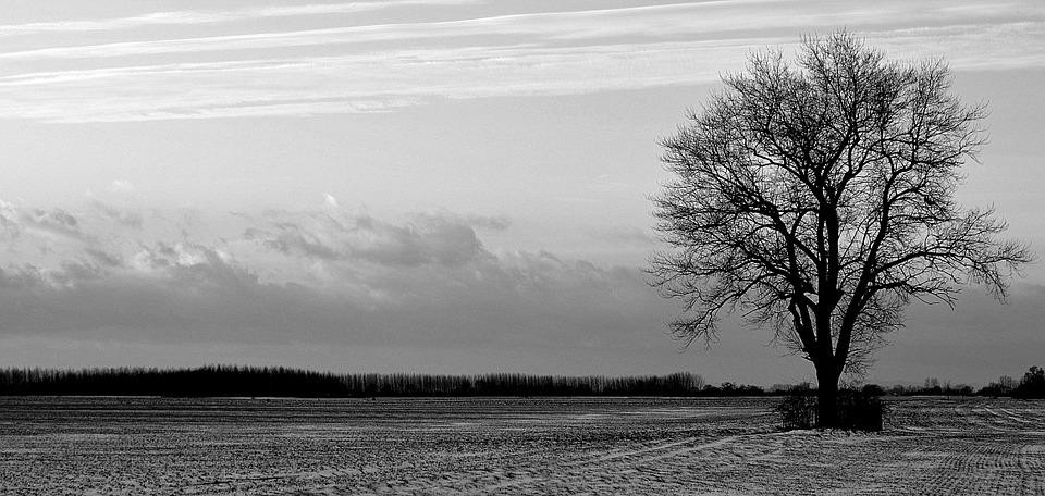 Tree, Solitude, Field, Evening, Snow, Winter, Clouds