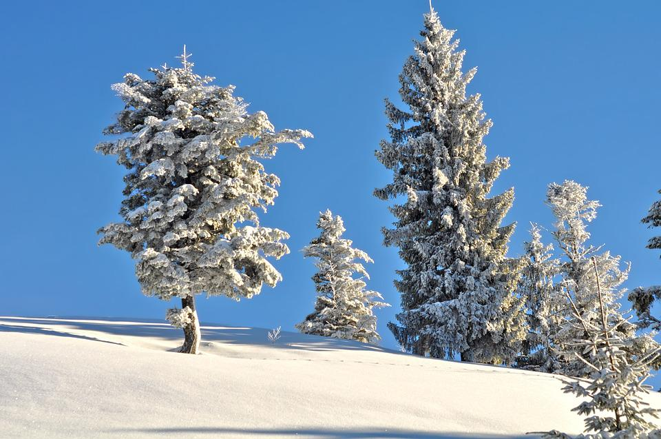 Snow, Winter, Frost, Cold, Tree